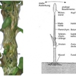 BotanicHorizon veranschaulicht