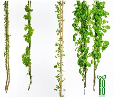 Pflanzen Hängend botanichorizon urban gardening – das magazin für digitale entrepreneure