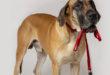 GOLEYGO einfaches An- und Ableinen des Hundes mit Handschuhen