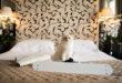 LucyBalu x Choupette: Sonderedition mit Karl Lagerfeld Katze